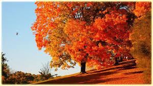 fall images free desktop backgrounds
