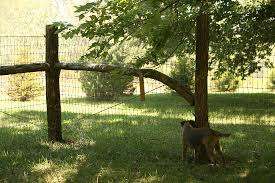 Beautiful Rustic Dog Fence