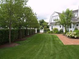 Pin By Rebecca Miller Campbell On Landscape Designs Privacy Landscaping Landscaping Along Fence Backyard Trees