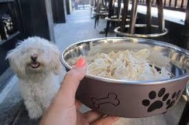 best dog friendly bar or restaurant