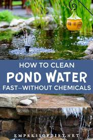 how to clean gross murky pond water