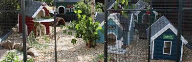Outdoor Housing Rabbit Welfare Association Fund Rwaf