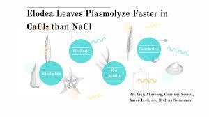 Plasmolysis by c s on Prezi Next
