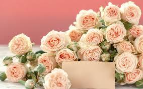 تحميل خلفيات الورود البرتقالية جميلة باقة كبيرة من الورود بطاقة