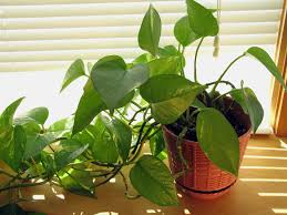 the most toxic houseplants to avoid if