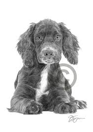 Dog COCKER SPANIEL PUPPY Pencil Drawing ...
