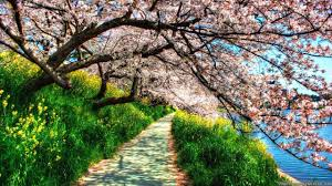 spring nature wallpapers top free