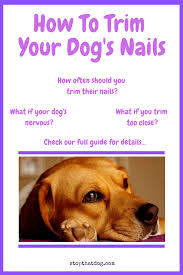 how to trim your dog s nails here s