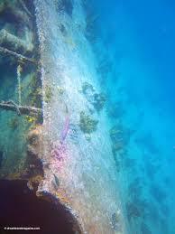 de palm tours snorkel adventure