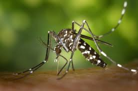 mosquito control for your home