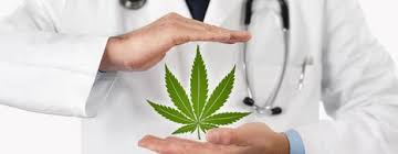 Take help from a cannabis doctor in Los Angeles...