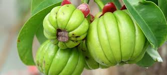garcinia cambogia safe for weight loss