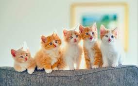 أسماء قطط بنات أفضل 200 اسم من أسماء قطط اناث 2020 موسوعة