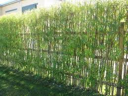 8 Living Fence Ideas To Beautify Your Outdoor Space Matchness Com Natural Fence Living Willow Fence Willow Fence