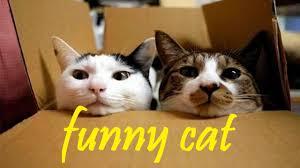 صور اجمل واحدث صور قطط مضحكة اجمل القطط المضحكة صورة قطة تخبل