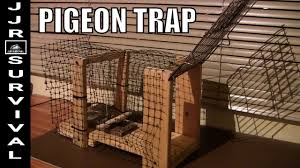 homemade pigeon trap you