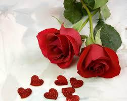 صور ورد حب احلى الهدايا والورود كلمات جميلة