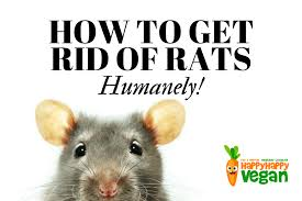 how to get rid of rats humanely no