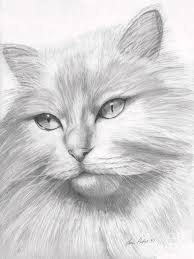 Compilation Of Drawn Cats Steemit