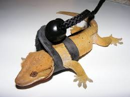 crested gecko leashes