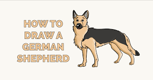 how to draw a german shepherd really