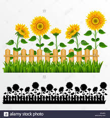 Border With Sunflowers And Fence Stock Photo Alamy