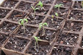 fall vegetable planting guide for