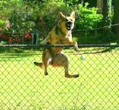 Electric Fence Hot Wire Electric Fence For Dogs