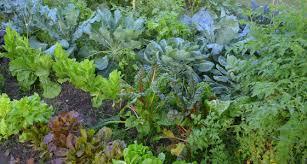 preparing for fall vegetable gardening