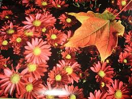 fall flowers wallpapers 1024x768