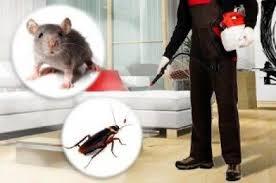 مكافحة حشرات 58852623 الكويت - 40645