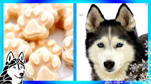 diy frosty paws for your dog frozen