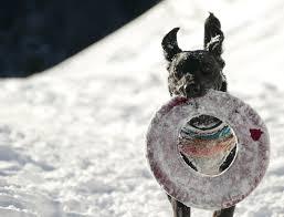 natural kidney disease dog treats