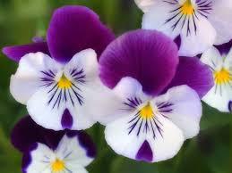 خلفيات زهور ليدي بيرد