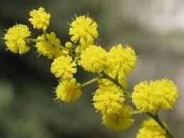 Non solo mimose nella giornata dell'8 marzo: riflessioni e ...