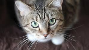 2019 Best Wireless Cat Fence Review Petsecureyard