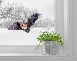 Bat Wall Decal Window Decal Halloween Decor Wall Sticker Gift Etsy