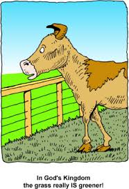 Image Cow Looking At Greener Grass On Other Side Of Fence Christart Com