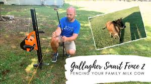 How We Set Up And Move Our Gallagher Smart Fence 2 Fencing For Mini Jersey Cattle Youtube