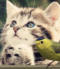 Cat Fencing Cats And Birds Cats And Birds