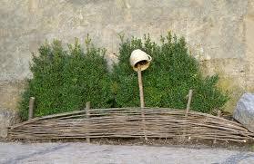 Boxwood Shrubs For Wicker Fence With Pot Stock Photo C Marinka 43044589