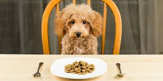 5 best high fiber dog foods in 2020