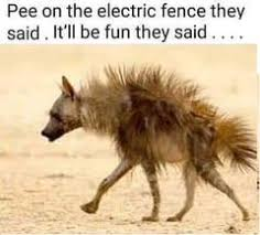 Are Electric Fences A Serious Safety Risk To Humans Agrisellex