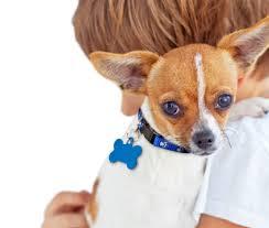 small dog rescue and adoption adopt a