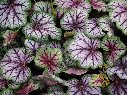 top 10 plants for shade the english