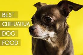 top 5 best dog foods for chihuahuas