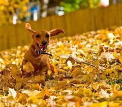 18 Dogs That Will Convince You Once And For All That Fall Is The Best Season
