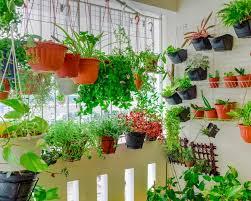 plant growth in balcony garden