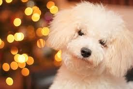 5 easy dog treat recipes for the holidays