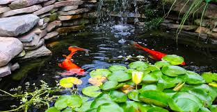 33 incredible koi pond ideas that will